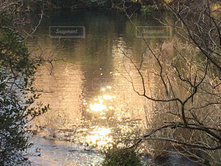 朝から輝いての写真・画像素材[2851981]