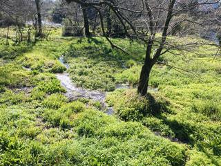 川沿いのクレソン畑の写真・画像素材[2971407]