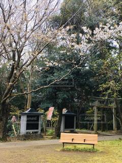 山桜とベンチがいいの写真・画像素材[3055079]