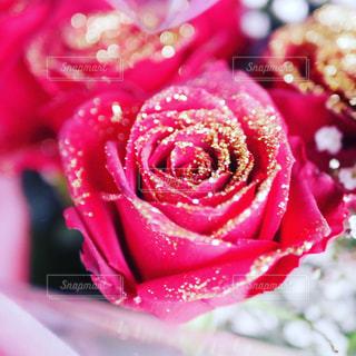 キラキラ薔薇さんの写真・画像素材[1287162]