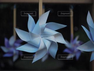 近くの花のアップの写真・画像素材[1287261]