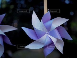 近くの花のアップの写真・画像素材[1287262]