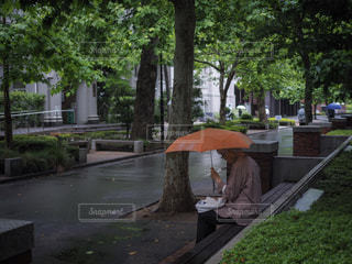 公園のベンチに座っている人の写真・画像素材[1287271]