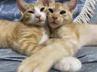 ソファの上の兄弟猫の写真・画像素材[4798983]