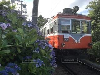 アジサイと箱根登山鉄道 その2の写真・画像素材[1287870]