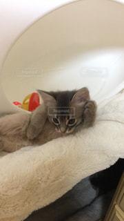 子猫の写真・画像素材[289662]