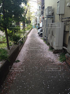 桜の写真・画像素材[290299]