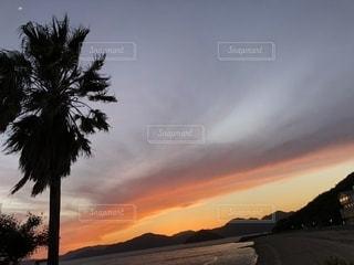 背景の夕日とツリーの写真・画像素材[1288590]