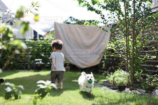 庭で走る犬と子どもの写真・画像素材[1288631]
