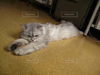横たわる猫の写真・画像素材[1845142]