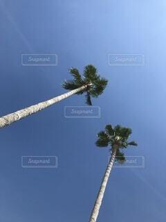南国の青空とヤシの木の写真・画像素材[3690364]