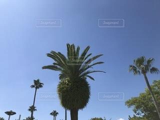 青空とヤシの木の写真・画像素材[3690478]