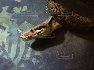 蛇の写真・画像素材[1364102]