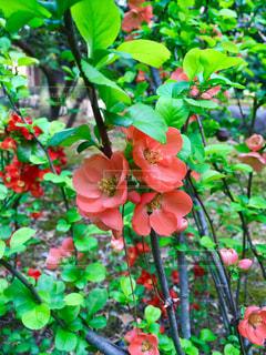 赤い花の写真・画像素材[1290226]