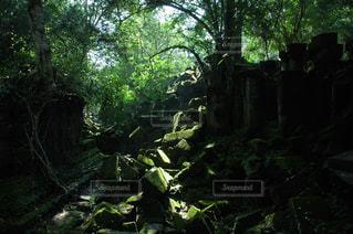 カンボジアの遺跡の写真・画像素材[1292865]
