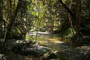 森の中にある川の写真・画像素材[1292942]