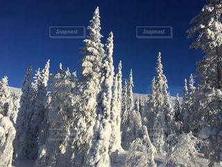 フィンランドの樹氷の写真・画像素材[1290033]
