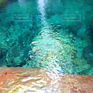 水面下を泳ぐ魚たちの写真・画像素材[1416667]