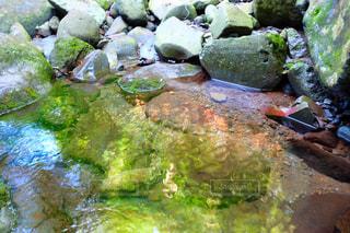 自然の写真・画像素材[1416669]