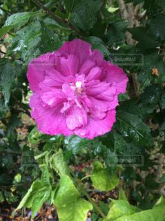 花の写真・画像素材[1331980]