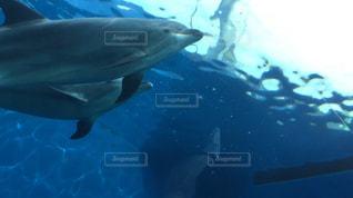 イルカの親子の写真・画像素材[1762386]