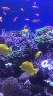 水族館のサンゴ礁の写真・画像素材[1762389]