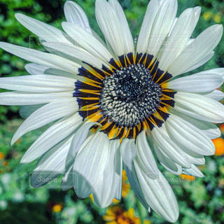 花のクローズアップの写真・画像素材[2178841]