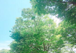 緑色の写真・画像素材[1291231]