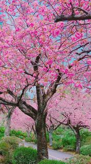 春の写真・画像素材[1291269]