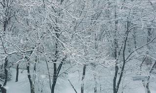 冬の写真・画像素材[1291281]