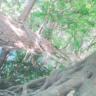 町中にある自然の写真・画像素材[1291589]