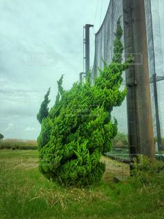 うねる木の写真・画像素材[1296564]