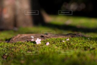 春の落し物の写真・画像素材[1294047]