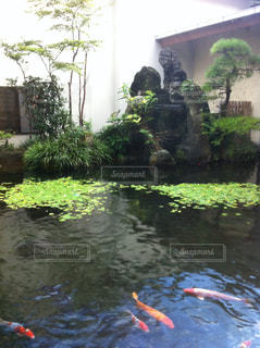 水を泳ぐ人たちのグループの写真・画像素材[1293894]