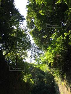 近くの木のアップの写真・画像素材[1294539]