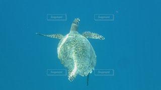 水の下で泳ぐ海亀の写真・画像素材[1295201]