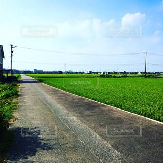 道路の写真・画像素材[1295556]