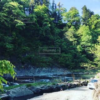 背景の水の庭の写真・画像素材[1296334]