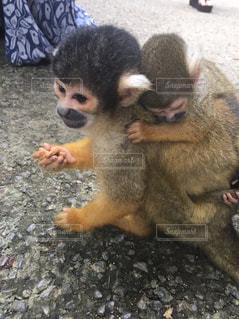 犬、サルの写真・画像素材[1299201]