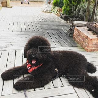 犬の写真・画像素材[1294475]