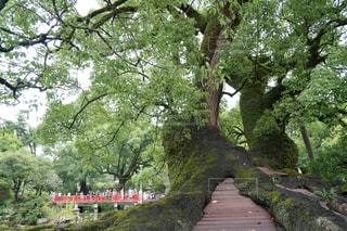 太宰府 橋と木の写真・画像素材[1294677]