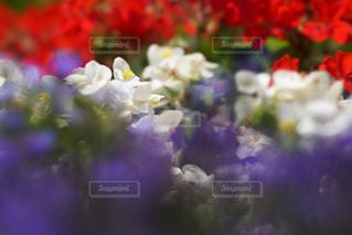 近くの花のアップの写真・画像素材[1301223]