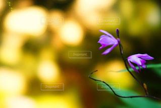 近くの花のアップの写真・画像素材[1301226]