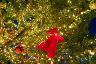 クリスマス ツリーの写真・画像素材[1303585]