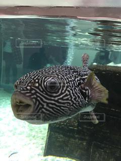 水の中を泳ぐ魚の写真・画像素材[1296410]