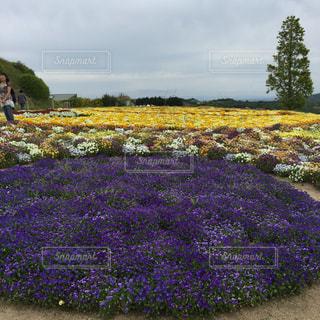 フィールドの花の写真・画像素材[1303681]