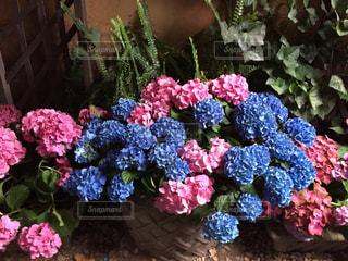 近くの花のアップの写真・画像素材[1305707]