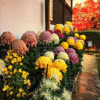 黄色の花の束の写真・画像素材[1314563]