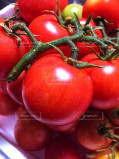 赤いプチトマトの写真・画像素材[1332333]