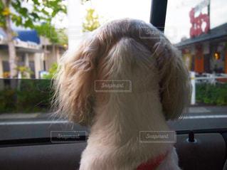 背中で語る犬の写真・画像素材[1295536]